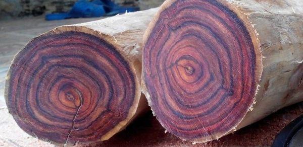 Màu sắc vân gỗ đẹp